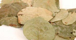 Ayva Yaprağı Çayı Nasıl İçilir? Faydaları Nelerdir?