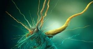 Temiz Olduğuna İnanılan Mikrop Yuvası Eşyalar