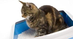 Kedi Tuvaleti Nasıl Temizlenir?