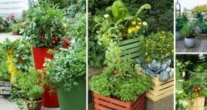 Balkonda Yetiştirilebilecek 10 Meyve Ve Sebze