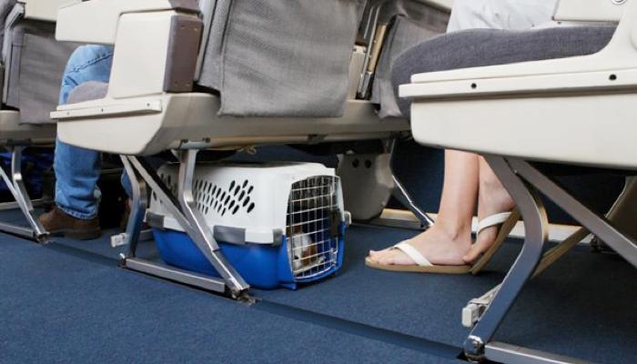 Evcil-Hayvanlarla-Yapılacak-Seyahatlerde-Unutmamanız-Gereken-7-Nokta