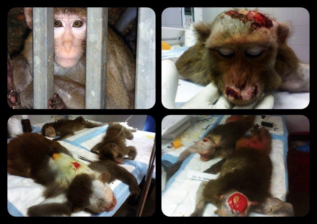 Hayvanlar üzerinde deney yapmayan kozmetik markaları nelerdir?