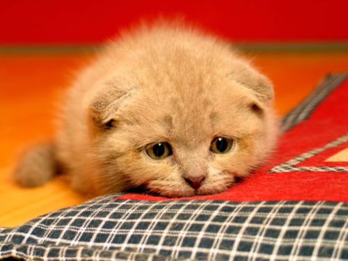 Kedinizin hasta olduğunu nasıl anlarsınız