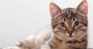 Kedinizi Evde Nasıl Yalnız Bırakırsınız?