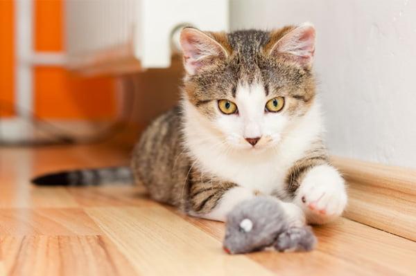 Kedinizi Evde Nasıl Bırakırsınız