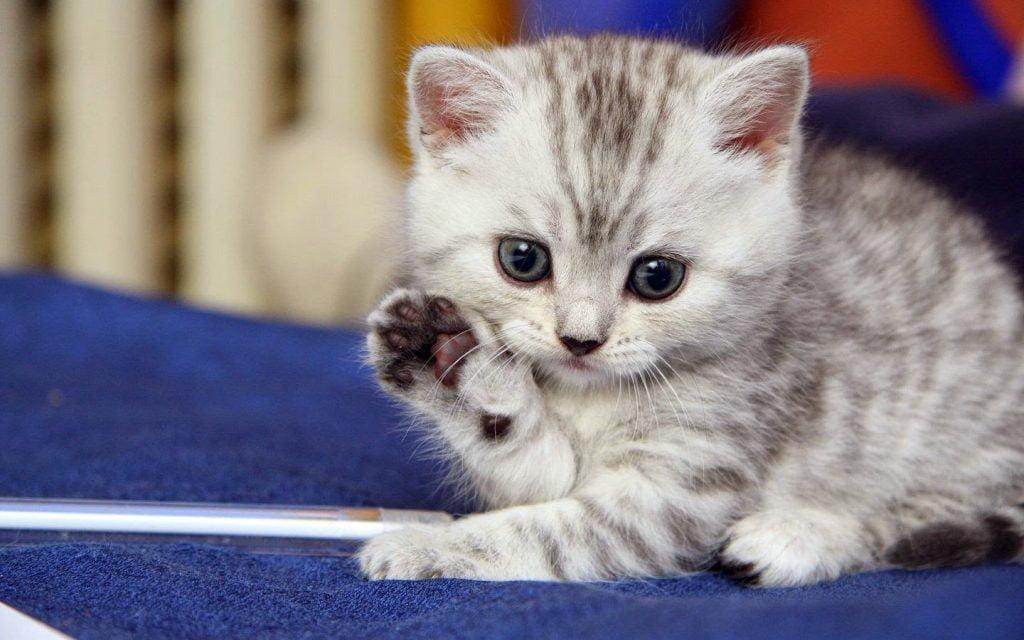 yavru kedi nasıl bakılır