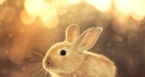 Tavşan Nasıl Bakılır?