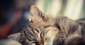 Yavru Kedi Nasıl Bakılır?