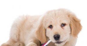 Köpeğin Diş Bakımı Nasıl Yapılır?