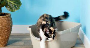 En İyi Kedi Kumu Hangisi? Kedi Kumu Nasıl Seçilir?