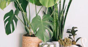 Güneş Işığına İhtiyaç Duymayan 10 Gölge Sever Bitki